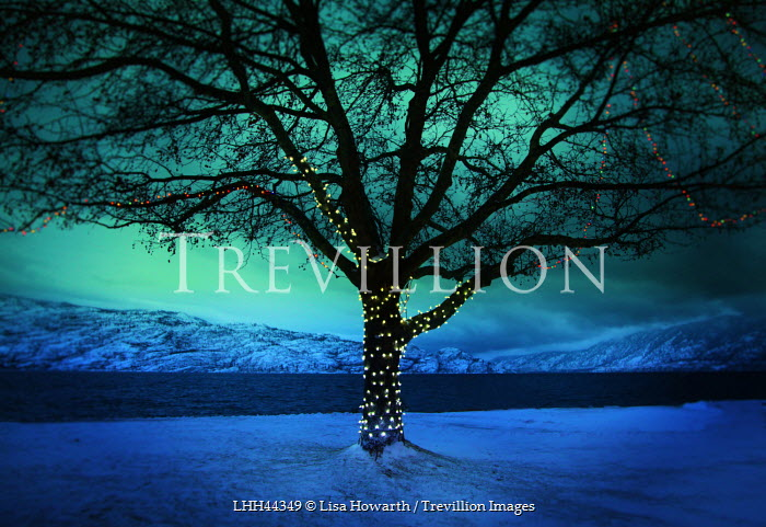 Lisa Howarth TREE WITH FAIRY LIGHTS IN SNOW Snow/ Ice