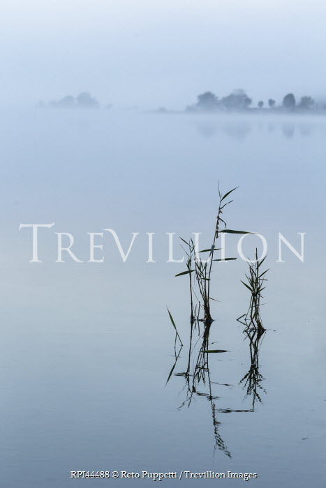 Reto Puppetti MISTY LAKE WITH REEDS Seascapes/Beaches