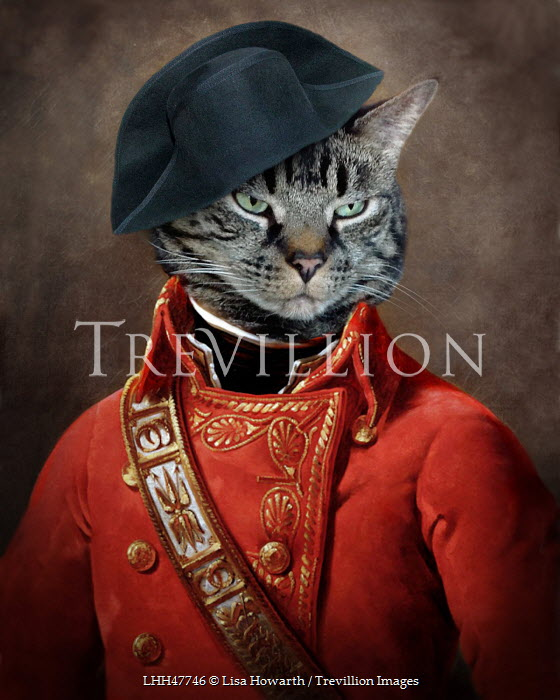 Lisa Howarth CAT DRESS AS NAPOLEON Animals