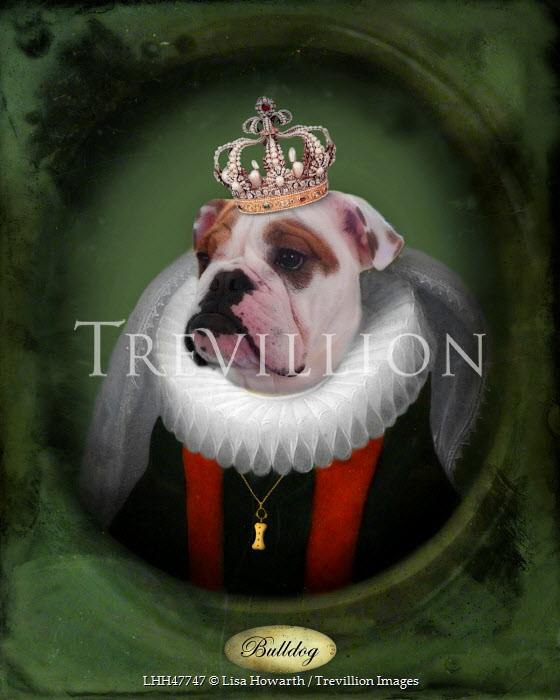 Lisa Howarth DOG IN ROYAL COSTUME Animals
