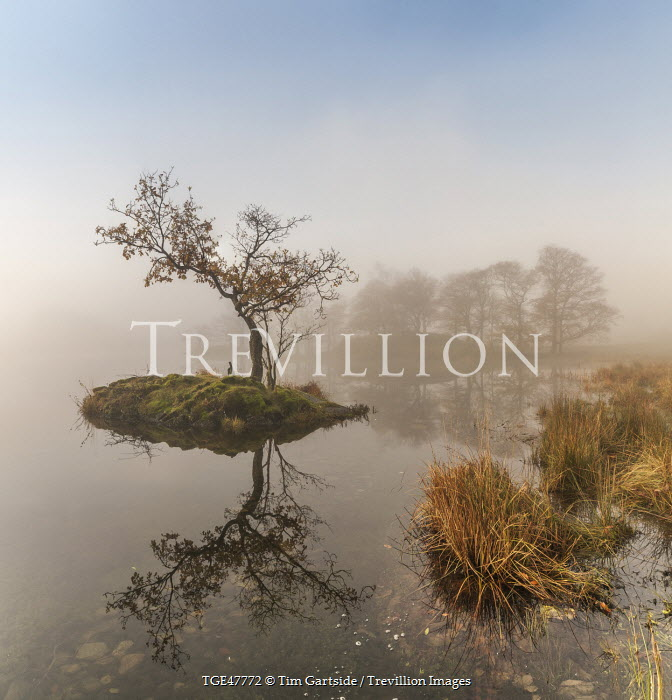 Tim Gartside TREE ON ISLAND REFLECTED ON MISTY LAKE Miscellaneous Water