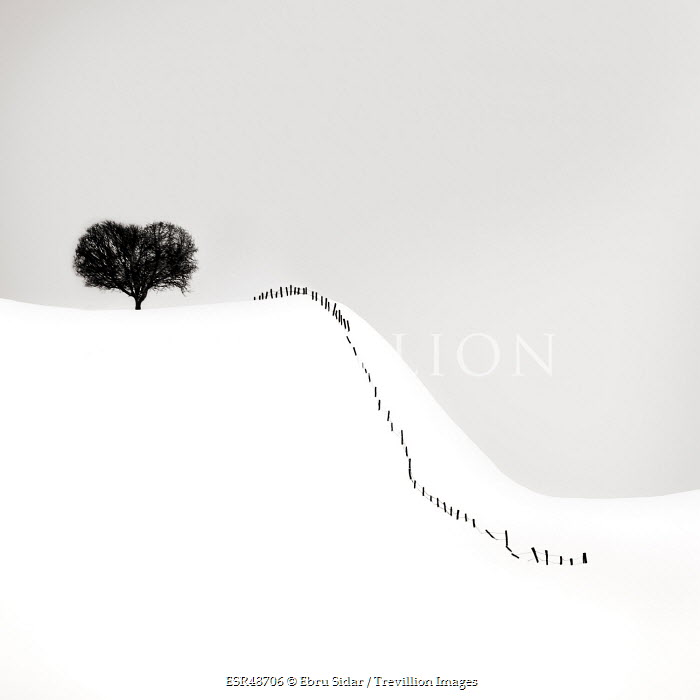 Ebru Sidar TREE AND FENCE POSTS IN SNOW Snow/ Ice