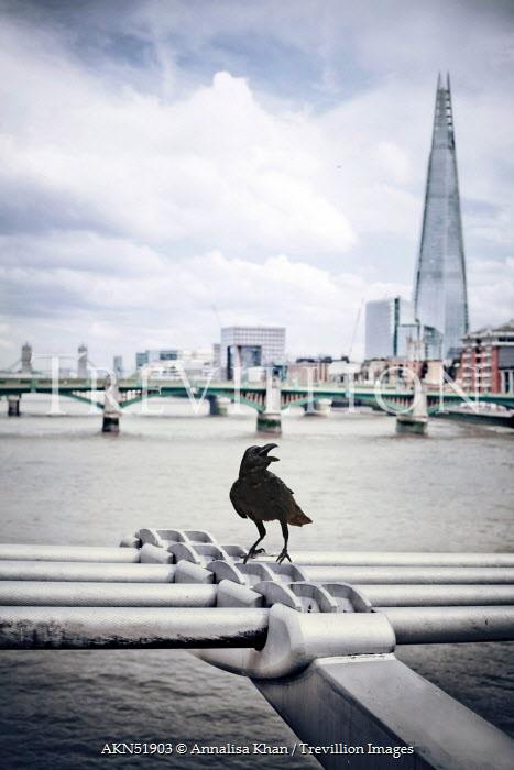 Annalisa Khan LONDON SKYLINE WITH BIRD Bridges