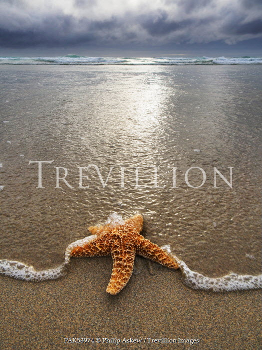 Philip Askew STAR FISH WASHED UP ON BEACH Animals