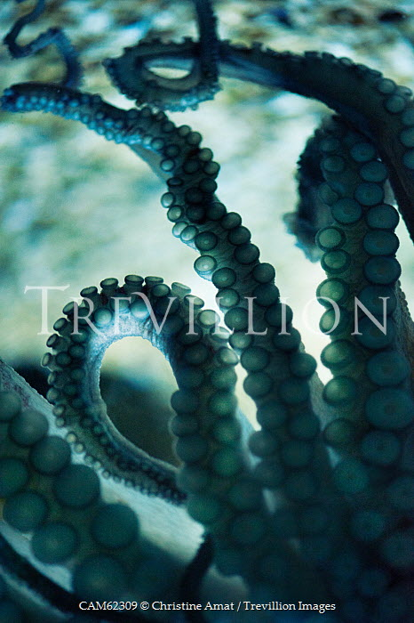 Christine Amat CLOSE OF OCTOPUS TENTACLES IN WATER Animals