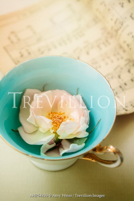 Amy Weiss FLOWER INSIDE CHINA CUP BESIDE SHEET MUSIC
