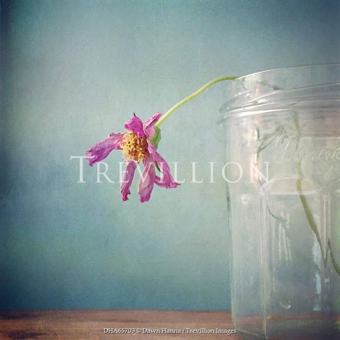 Dawn Hanna WILTED FLOWER IN GLASS JAR INDOORS Flowers