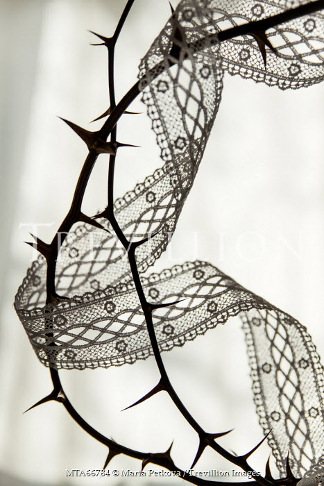 Maria Petkova SPIKY THORNS AND LACE RIBBON Miscellaneous Objects