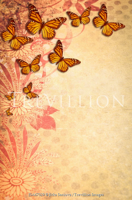 Jitka Saniova BUTTERFLIES ON PATTERNED BACKGROUND Insects