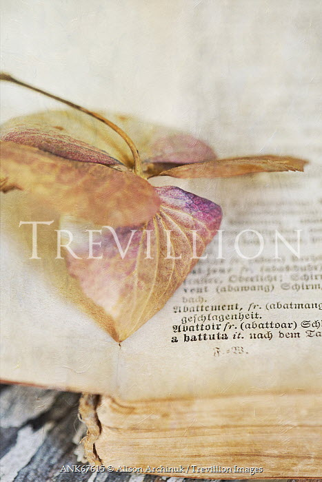 Alison Archinuk LEAF IN OLD BOOK Miscellaneous Objects