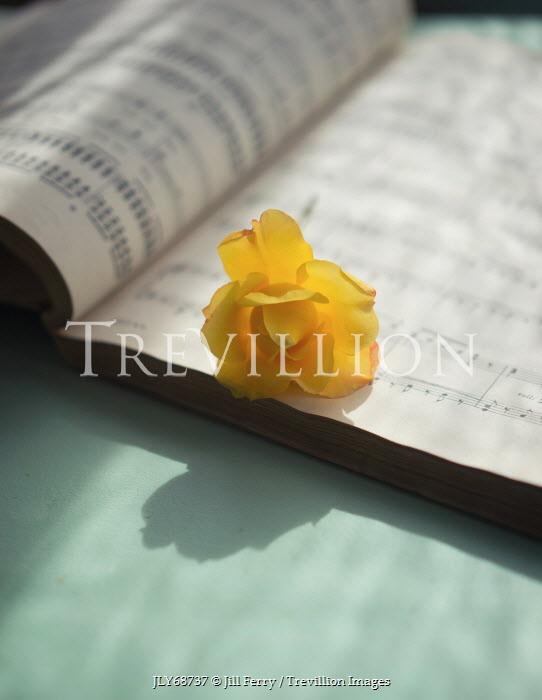Jill Ferry YELLOW FLOWER ON SHEET MUSIC Musical Instruments