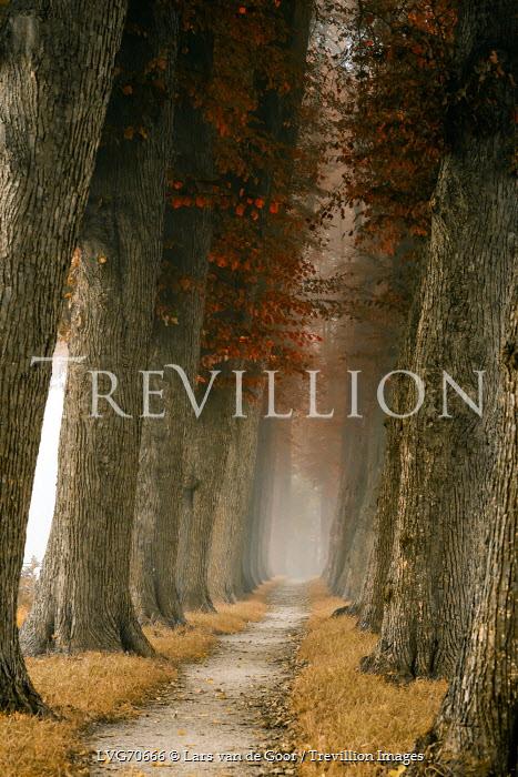 Lars van de Goor PATH THROUGH EMPTY AUTUMN FOREST Paths/Tracks
