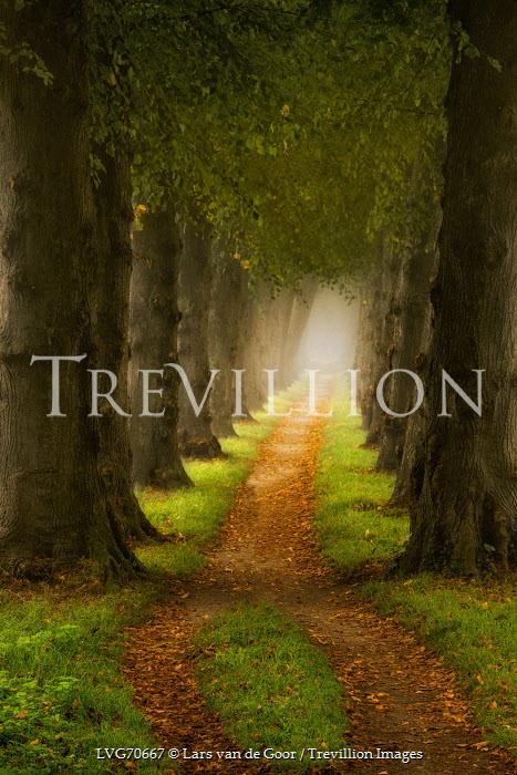 Lars van de Goor PATH THROUGH TALL GREEN TREES Paths/Tracks