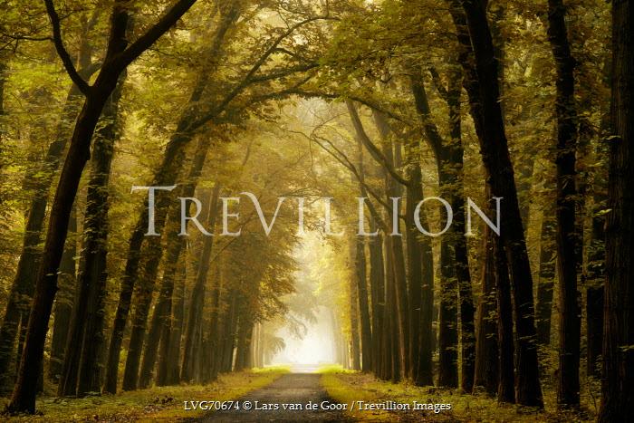 Lars van de Goor EMPTY PATH THROUGH GREEN TREES Paths/Tracks