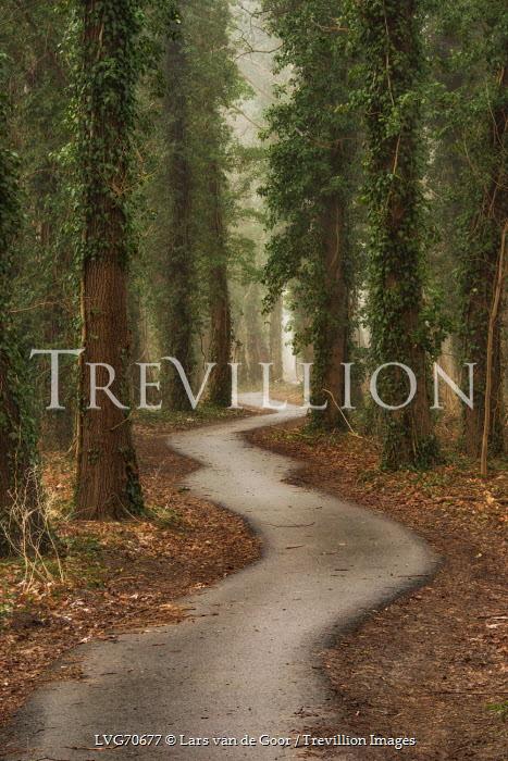 Lars van de Goor PATH THROUGH IVY COVERED TREES Paths/Tracks