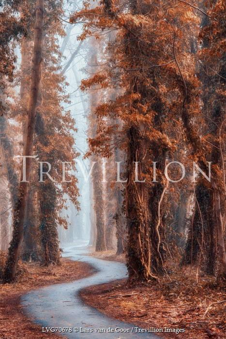 Lars van de Goor PATH THROUGH AUTUMN TREES Paths/Tracks