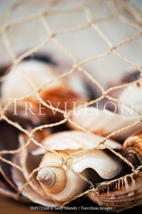 Sally Mundy SEA SHELLS CAUGHT IN NET Miscellaneous Objects