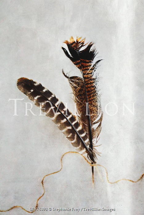 Stephanie Frey Two tattered turkey feathers tied with string Miscellaneous Objects