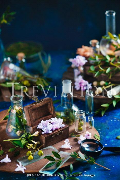 Dina Belenko FLOWERS AMD LEAVES IN GLASS BOTTLES Flowers