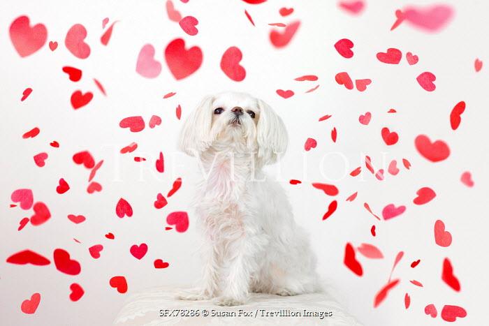 Susan Fox WHITE DOG UNDER FALLING HEART CONFETTI Animals