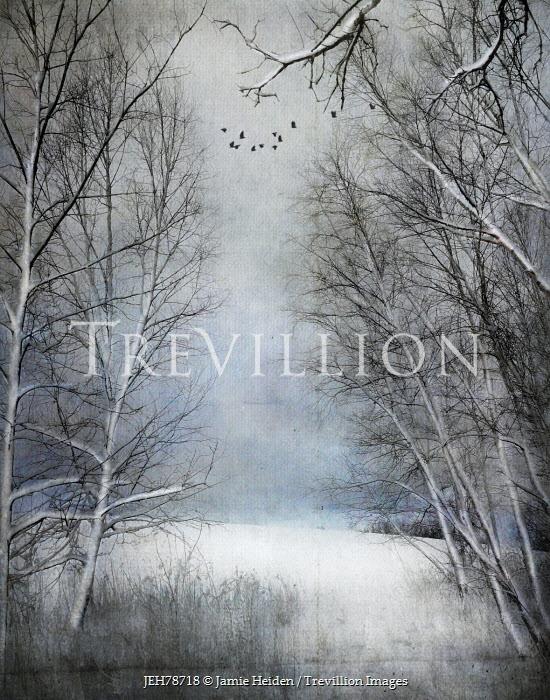 Jamie Heiden TREES IN SNOWY COUNTRYSIDE Snow/ Ice