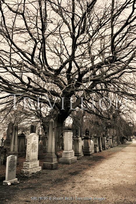 Stuart Brill PATH THROUGH GRAVEYARD IN WINTER Statuary/Gravestones