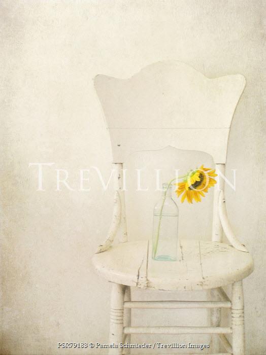 Pamela Schmieder SUNFLOWER IN GLASS BOTTLE ON CHAIR Flowers