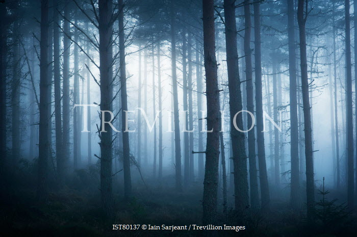 Iain Sarjeant FOGGY WINTRY EERIE FOREST Trees/Forest