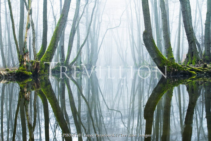 Leszek Paradowski GREEN MOSSY TREES REFLECTED IN LAKE Trees/Forest