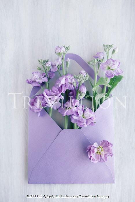 Isabelle Lafrance LIGHT PURPLE FLOWERS INSIDE ENVELOPE Flowers