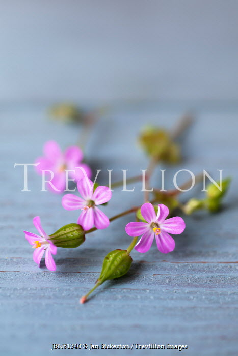 Jan Bickerton Pink flowers on blue wood Flowers