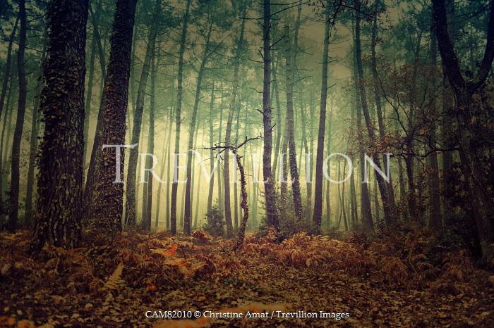 Christine Amat DENSE AUTUMN FOREST Trees/Forest