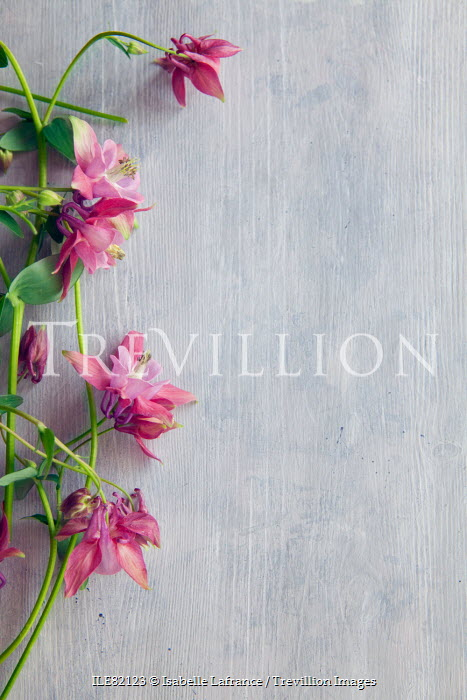 Trevillion images the ultimate creative stock photography isabelle isabelle lafrance pink wild flowers flowers mightylinksfo