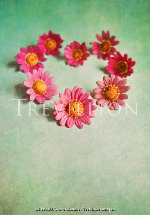 Lyn Randle PINK FLOWERS LYING IN HEART SHAPE Flowers