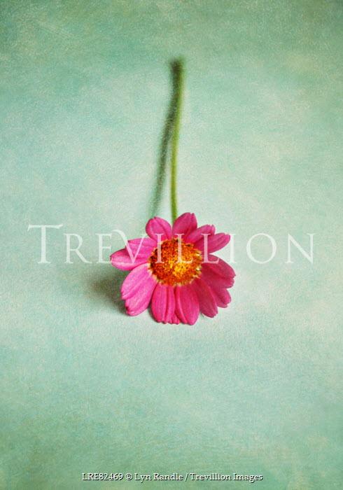 Lyn Randle PRETTY PINK FLOWER Flowers