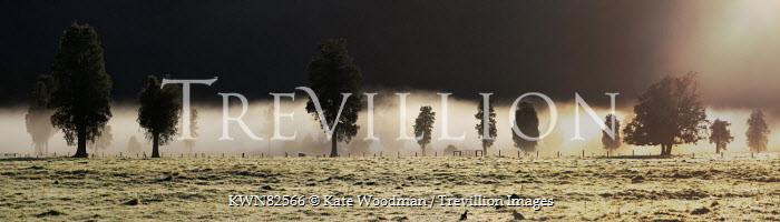 Kate Woodman FIELD OF TREES IN STORMY WEATHER Fields