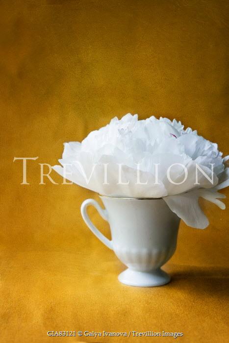 Galya Ivanova WHITE FLOWER IN CHINA TEA CUP Flowers