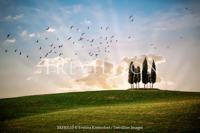 Evelina Kremsdorf trees in tuscan countryside Fields