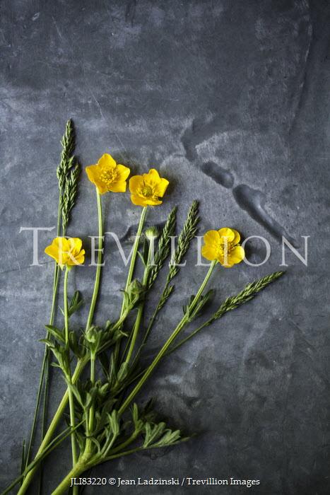 Jean Ladzinski YELLOW BUTTERCUP FLOWERS Flowers