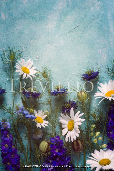 Galya Ivanova PURPLE AND WHITE FLOWERS ON BLUE TEXTURE Miscellaneous Objects