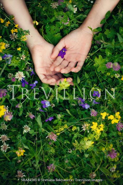 Svetlana Bekyarova FEMALE HANDS LYING IN WILD FLOWERS Men