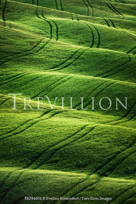 Evelina Kremsdorf wavy green fields in Tuscany, Italy Fields