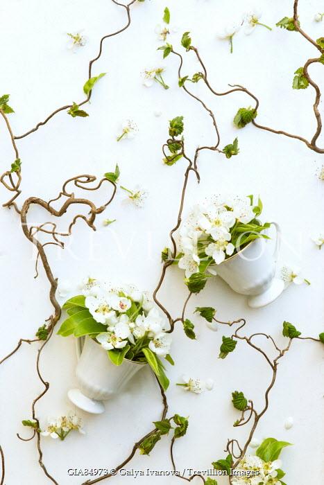 Galya Ivanova VASES WITH PRIMROSES AND CREEPING PLANTS Flowers