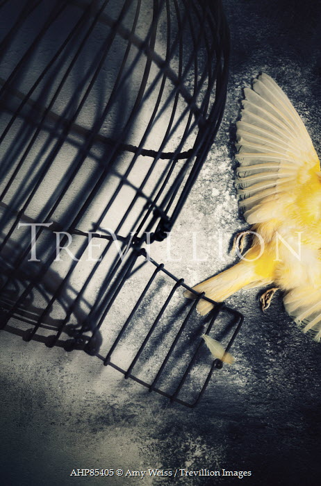 Trevillion Images The Ultimate Creative Stock Photography Amy