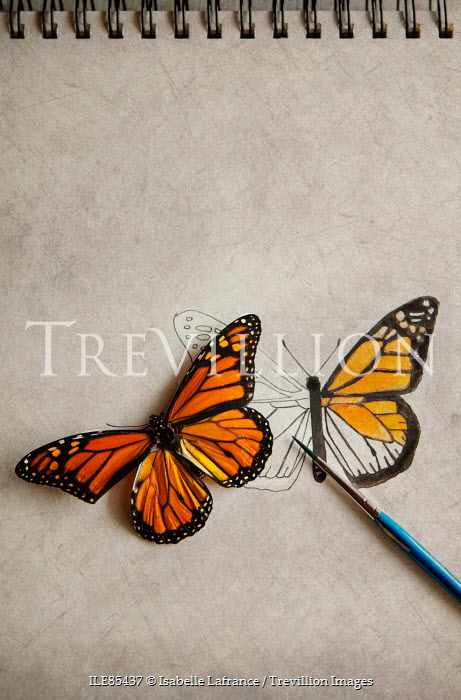 Isabelle Lafrance PAINTING OF ORANGE AND BLACK BUTTERFLY Insects