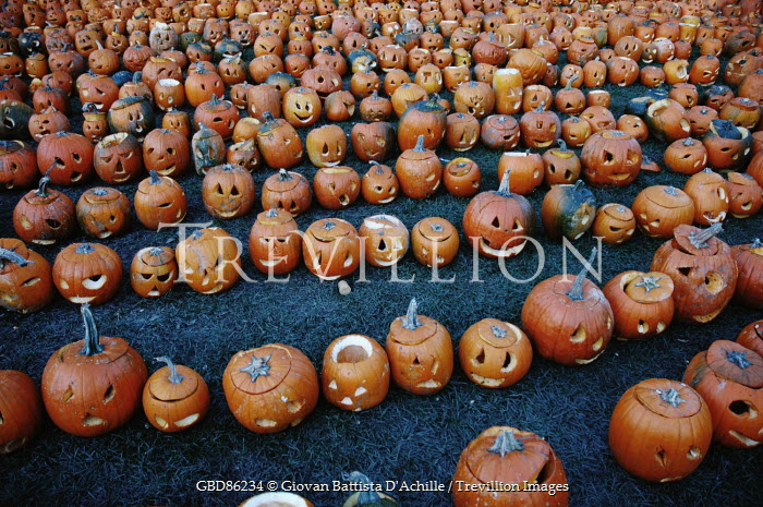 Giovan Battista D'Achille ROWS OF HALLOWEEN PUMPKINS Miscellaneous Objects