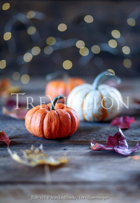 Jean Ladzinski PUMPKINS WITH AUTUMN LEAVES AND LIGHTS Miscellaneous Objects