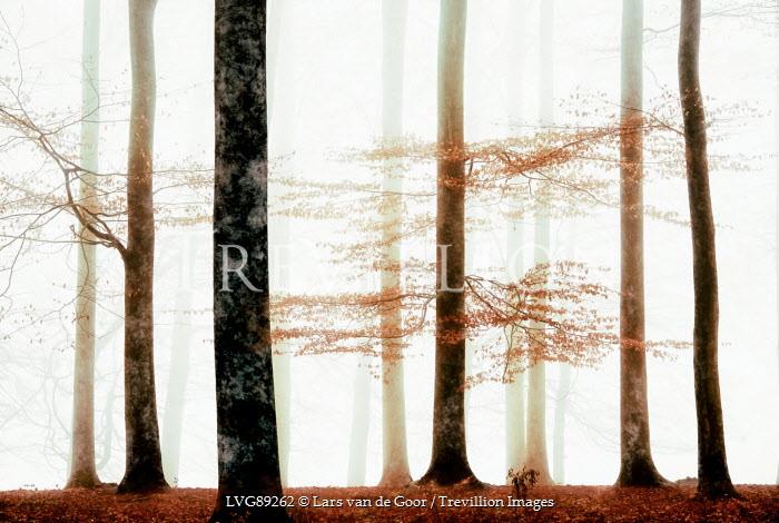 Lars van de Goor MISTY FOREST WITH AUTUMN LEAVES Trees/Forest