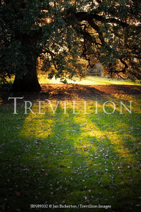 Jan Bickerton SUNLIGHT IN GARDEN WITH TREE Trees/Forest