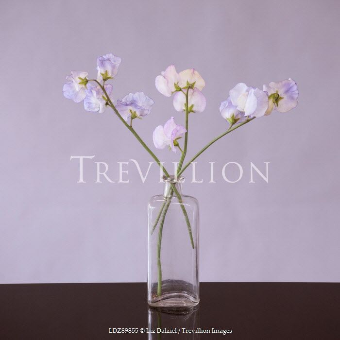 Liz Dalziel PURPLE FLOWERS IN BOTTLE Flowers